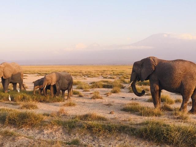 Reisebericht Afrika